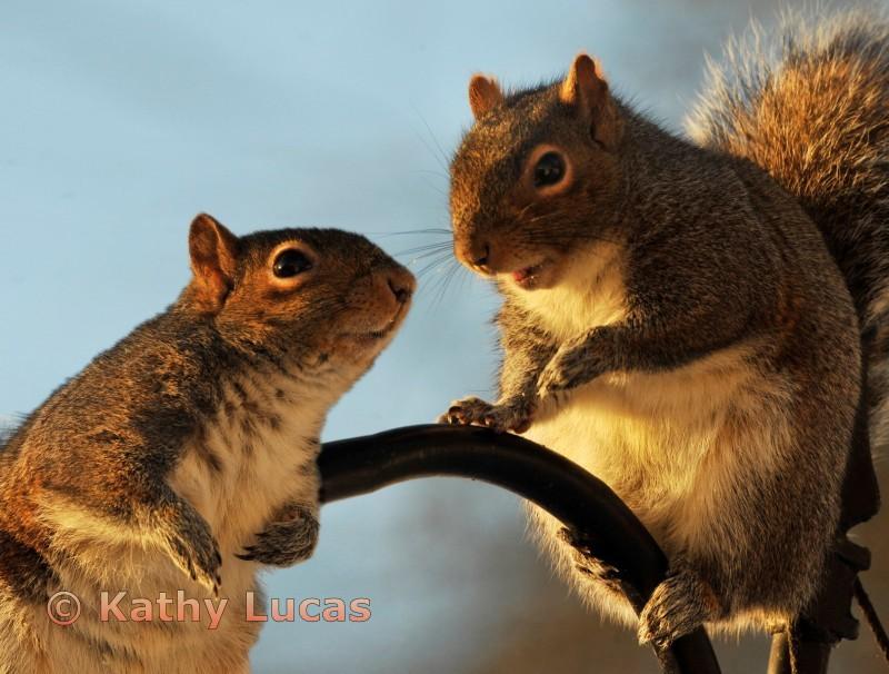 Squirrel Gossip