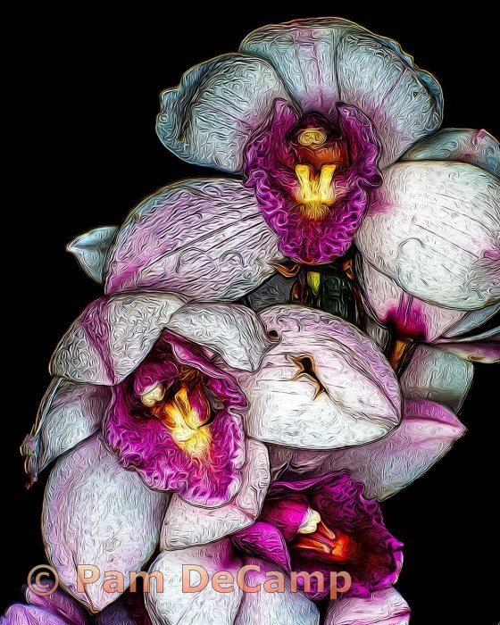 Orchids in Oil