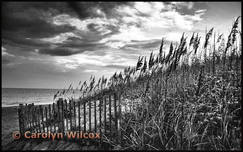 The Dune Fence