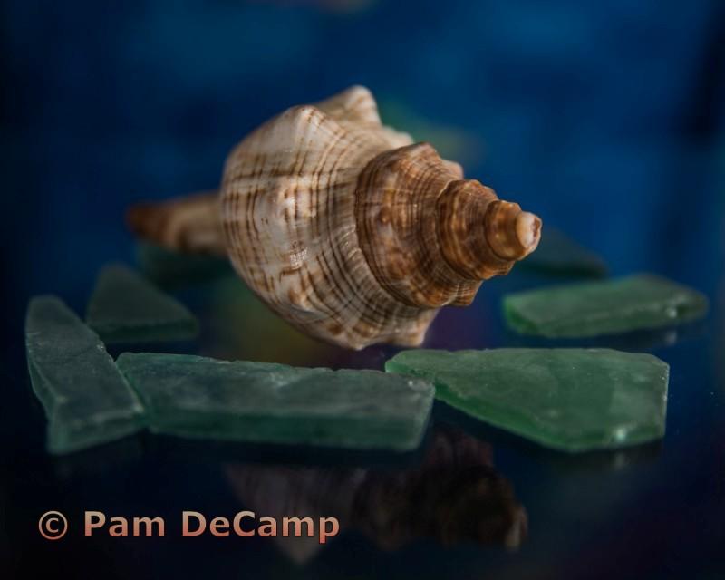 Sea Shell and Glass