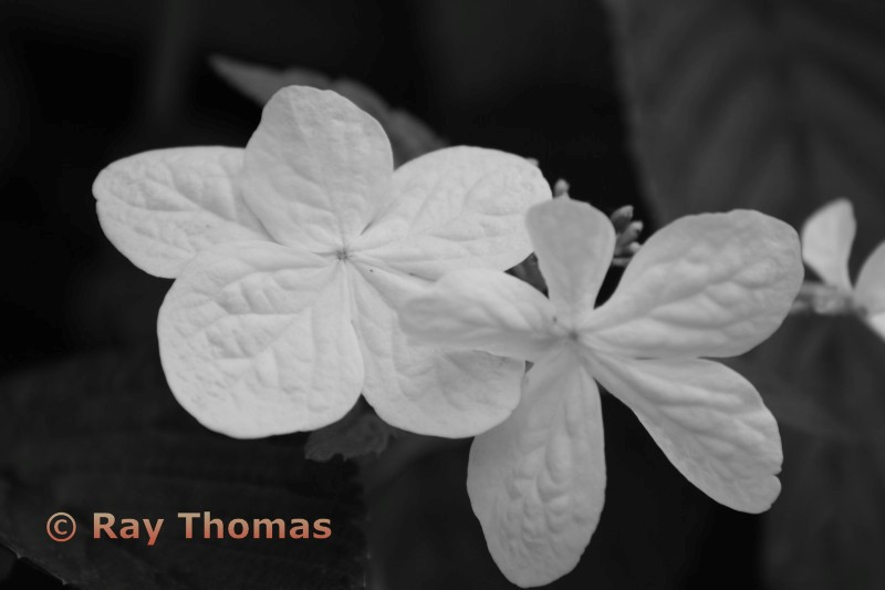 White Flower 3rd