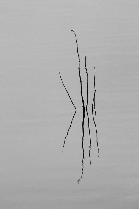 Sticks in Water