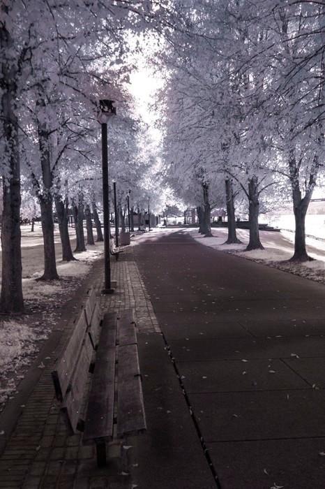 Harris Park Walk