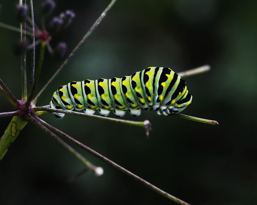 Bug on a Stick
