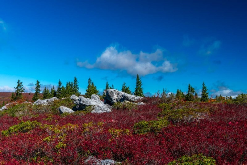 dolly-sods-fall