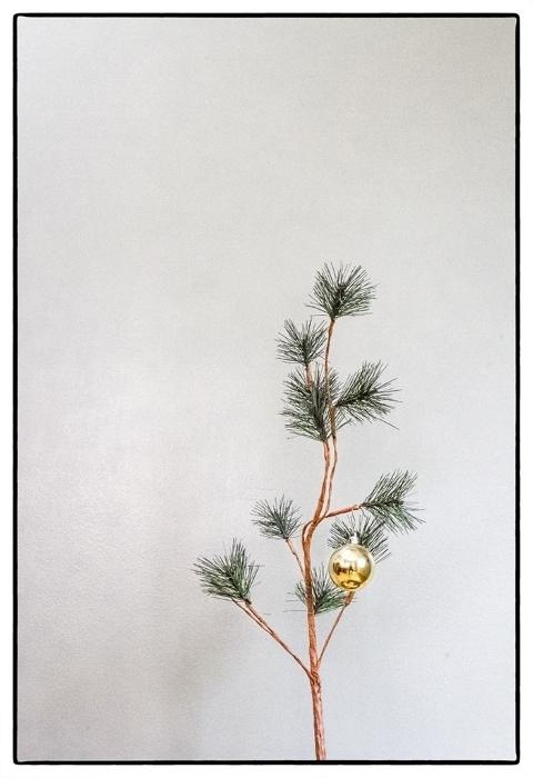 Chuck's Tree
