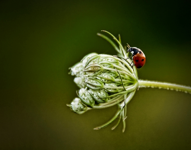 Ladybug, Fly Away Home