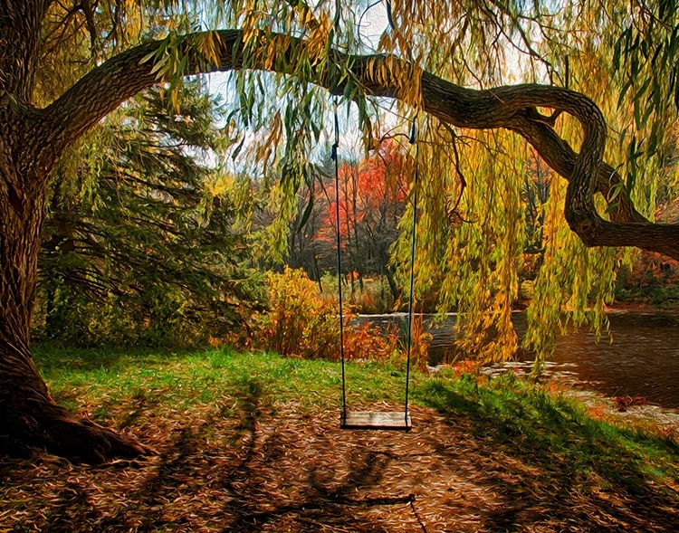 Swing in Willow