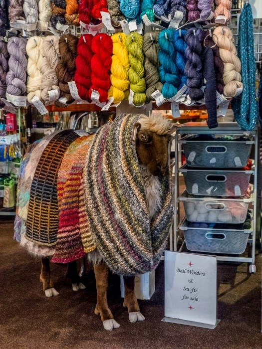 A Sheep Among the Skeins
