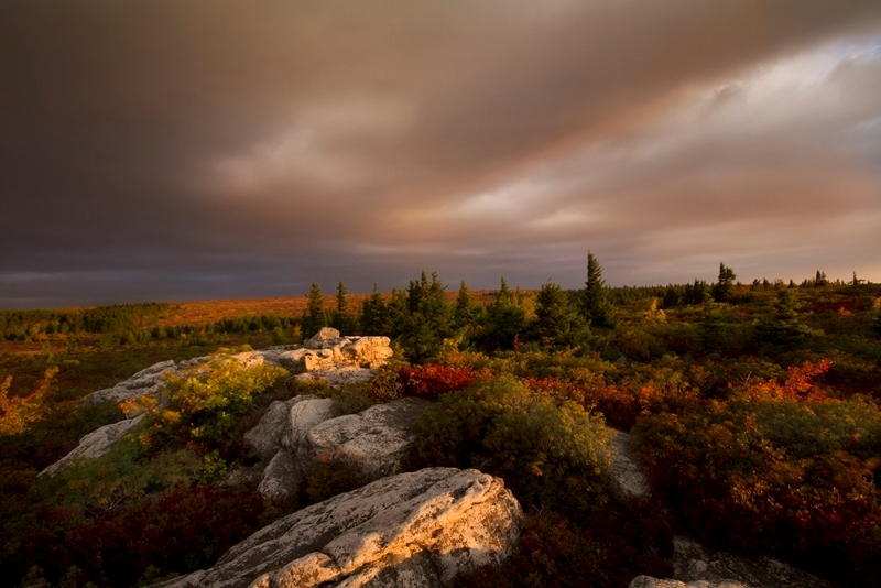 Dolly Sods Morning