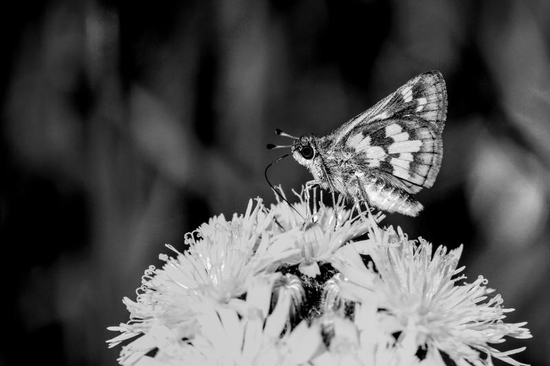 Butterfly #67