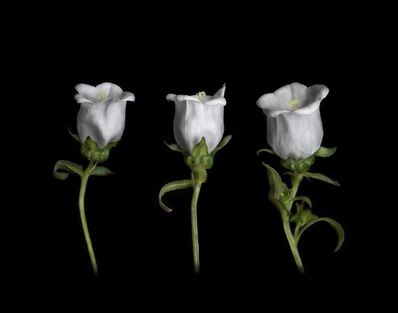 Three Belles