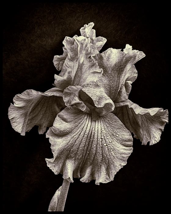 Monochrome Iris