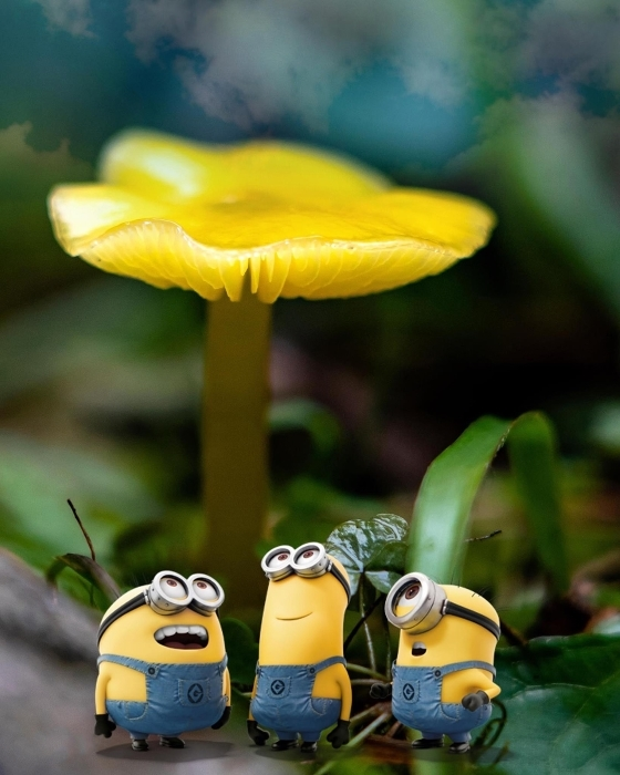 Minions & Mushrooms