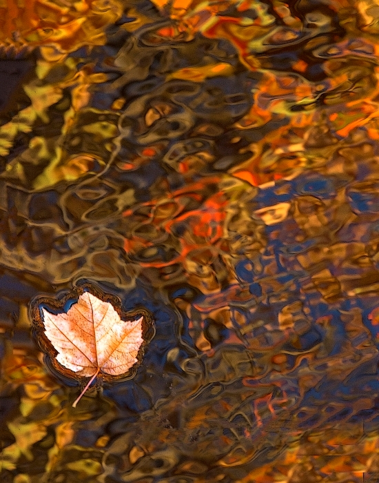 Leaf on Fall Reflections