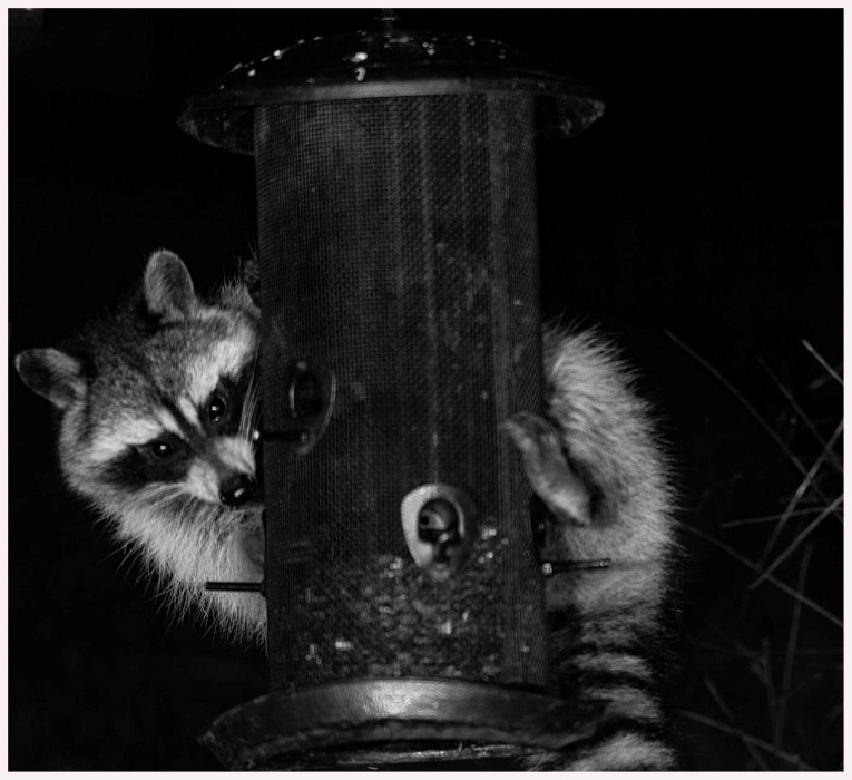 Midnight at the Feeder