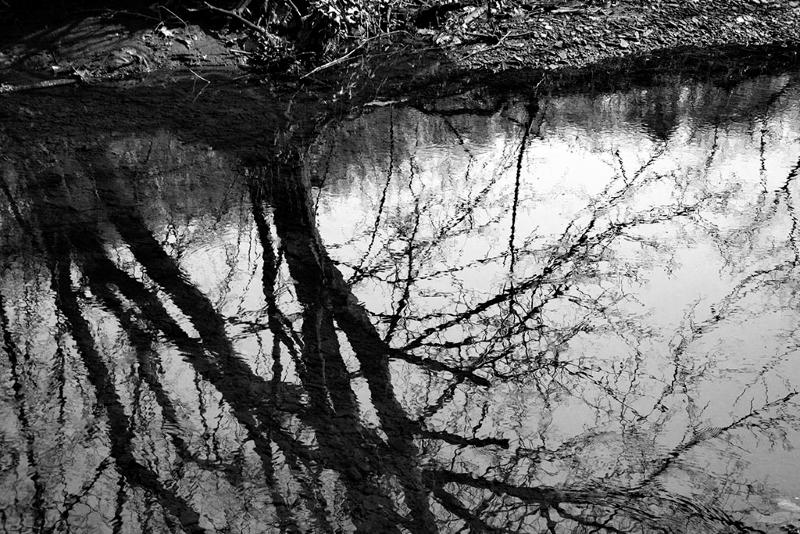 Reflections in Little Creek