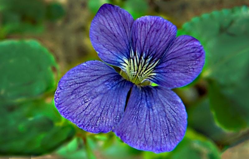 Wild Violet Energy