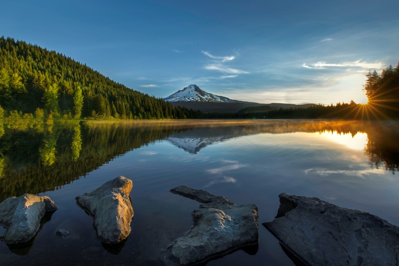 Misty Morning Trillium Lake