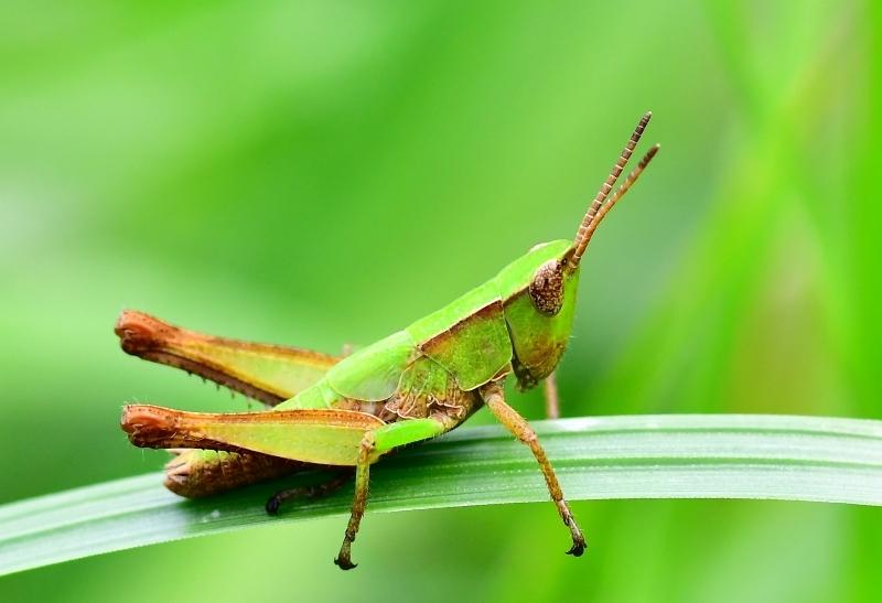 Tiny Cricket