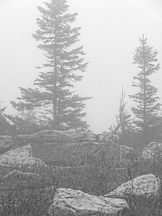 Foggy Dolly Sods