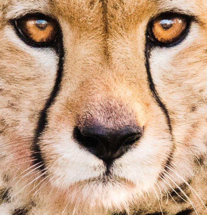 Eyes of a Predator