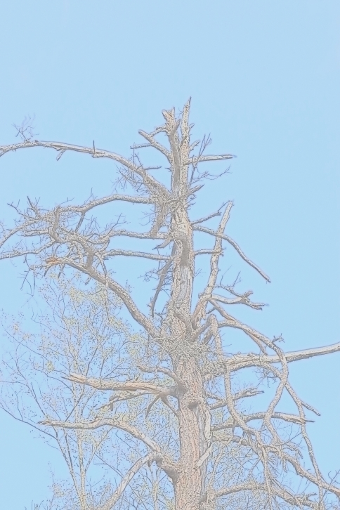 Water Painting Tree