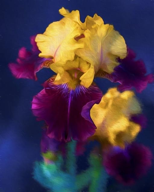 Mahogony & Yellow Iris