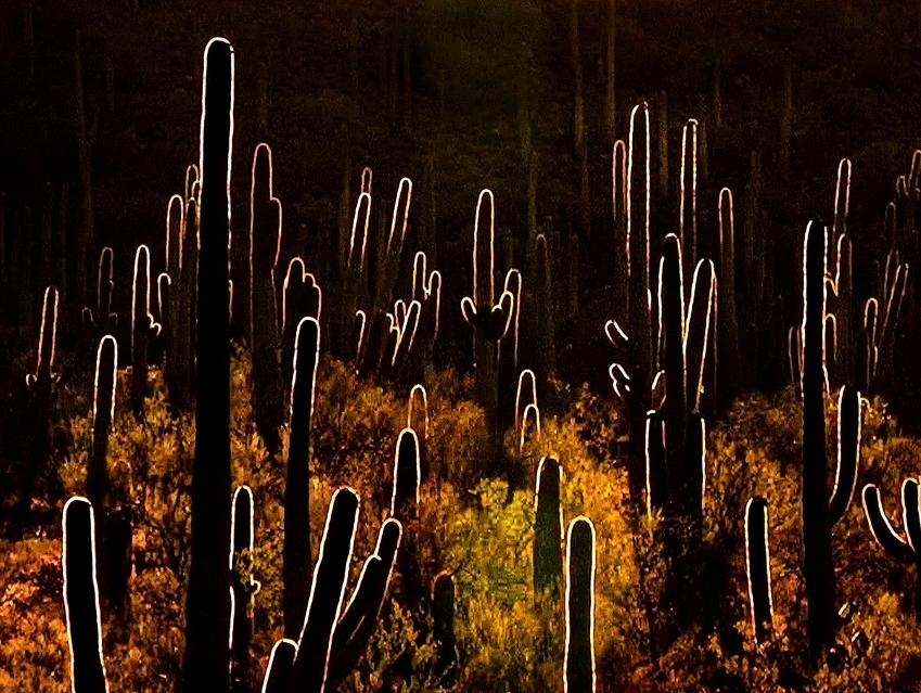 Backlite Cactus
