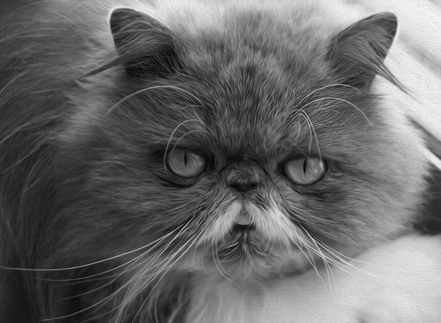 Kitty BW